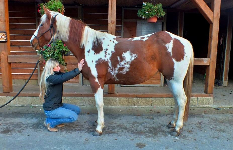 Dornova metoda u koní